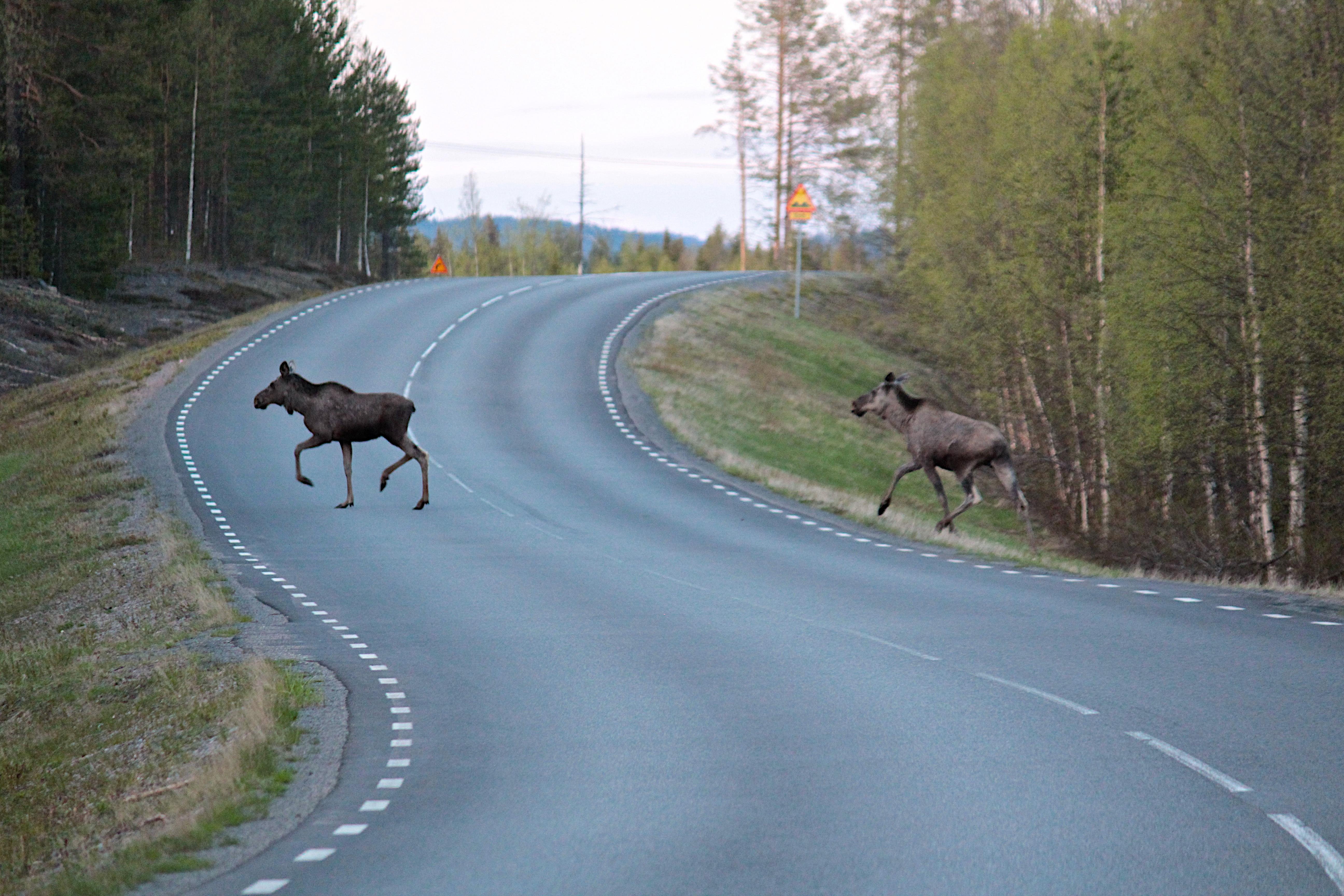 Sweden 35